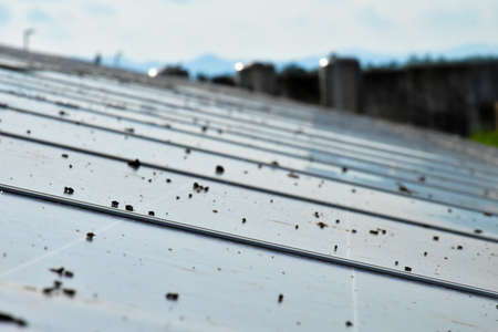 Pigeon's droppings on the surface of the photovoltaic system which installed on the roof of the building, concept for using renewable and sustainable power from the sunligh.
