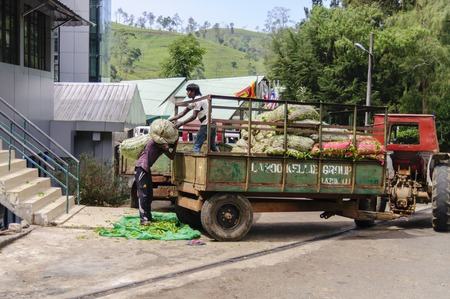 unload: Nuwara Eliya, Sri lanka: February 6, 2016 . Traktor near the Mackwoods labookellie tea factory and tea centre at labookellie. Workers unload sacks of tea.
