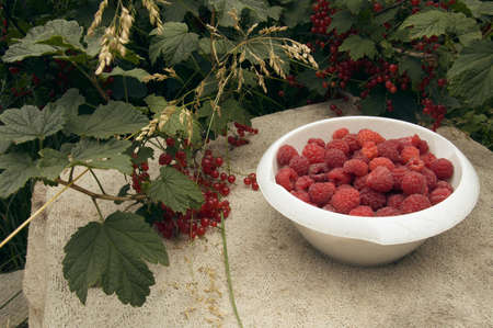a bowl of raspberries and red currant bushes