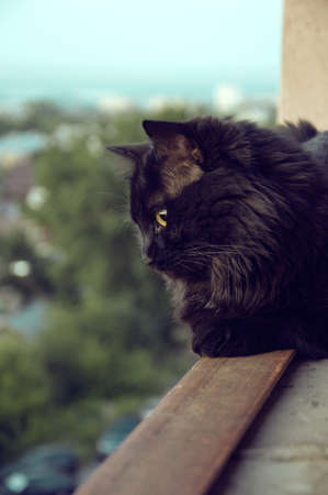 young black cat resting on a balcony