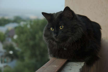 black cat sitting on the parapet of the balcony