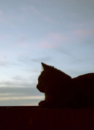 silhouette of a cat sitting on the parapet of a balcony in the early morning 版權商用圖片