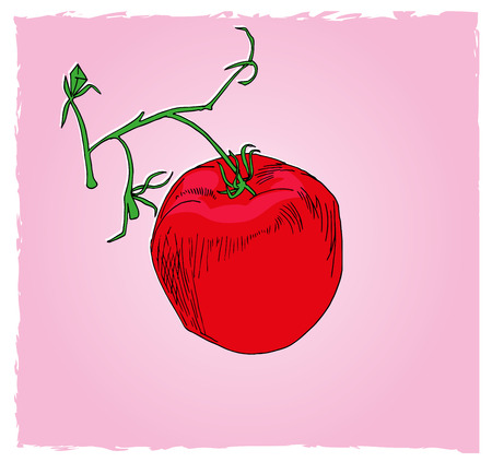 One tomato in the cluster. illustration of food, one red tomato in the green cluster with pink background.