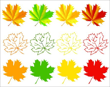 Autumn maple leaves Vector