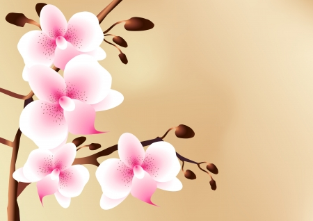 White orchids with pink spots, flowers and buds, eps 8 Vector