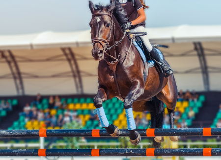 Horse and rider in uniform. Equestrian sport background.
