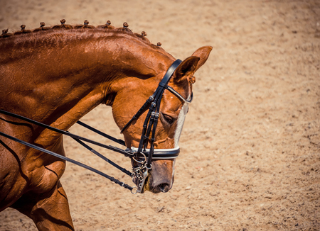 Dressage red horse in dressage competition. Advanced dressage test.