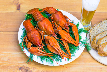 Boiled red crawfish on a white plate with a green fennel on a white wooden background. Tasty red steamed rawfish closeup with glass of beer on wood table, seafood dinner, nobody.