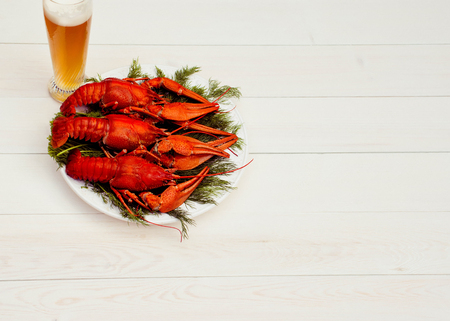 Boiled red crawfish on a white plate with a green fennel on a white wooden background. Tasty red steamed crawfish closeup with glass of beer on wood table, seafood dinner, nobody. Copy space for text.