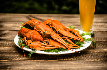 Boiled red crawfish on a white plate with green fennel on a wooden background. Tasty red steamed rawfish closeup on a wooden table, seafood dinner, nobody. Archivio Fotografico
