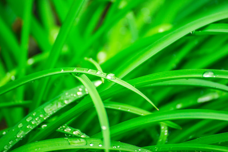 Green background with grass. Water drops on the green grass. Drop of dew in the morning on a leaf. Banner, header for web design.