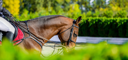 Beautiful girl on equestrian sports. Light brown horse Hot, shiny day. Copy space for your text.