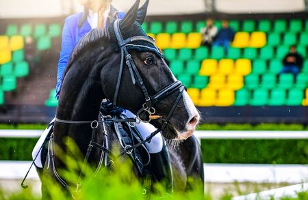 Beautiful girl on black horse in jumping show, equestrian sports. Horse and girl in uniform going to jump. Horizontal web header or banner design.