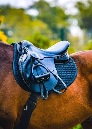 Black horse leather saddle, black saddle blanket and stirrups with dark straps dressed on the horse. Stock Photo