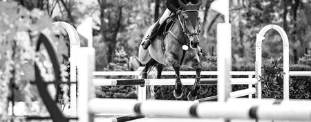 Beautiful girl on sorrel horse in jumping show, equestrian sports, black and white. Light-brown horse and girl in uniform going to jump. Horizontal web header or banner design.