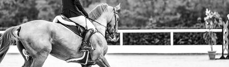 Beautiful girl on sorrel horse in jumping show, equestrian sportsblack and white. Light-brown horse and girl in uniform going to jump. Horizontal web header or banner design.