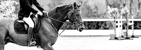 Rider on sorrel horse in jumping show, equestrian sports, black and white. Brown horse and man in uniform going to jump. Horizontal web header or banner design.