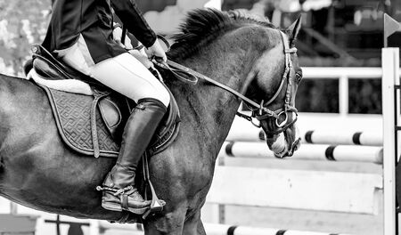 Rider on sorrel horse in jumping show, equestrian sports. Brown horse and man in uniform going to jump, black abd white. Horizontal web header or banner design.