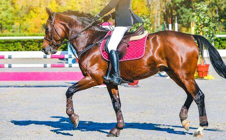 Piękna dziewczyna na koniu szczaw w skokach, sporty jeździeckie. Brązowy koń i dziewczyna w mundurze będzie skakać. Projekt nagłówka lub banera internetowego.