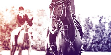 Black dressage horse and rider in uniform performing jump at show jumping competition, duotone, black and white. Equestrian sport background.Beautiful horse portrait during dressage competition. Selective focus.