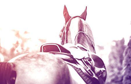 Black horse leather saddle, duotone, black saddle blanket and stirrups with dark straps dressed on the horse, black and white. Beautiful sorrel horse with bridle looking back.