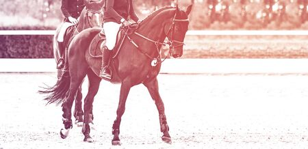 Beautiful girl on black horse in jumping show, equestrian sports, duotone, black and white. Horse and girl in uniform going to jump. Two riders. Horizontal web header or banner design. 免版税图像