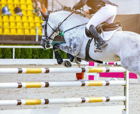 Horse and rider in uniform performing jump at Equestrian sport show jumping competition. Beautiful white horse portrait during tournament, Equestrian sport background, copy space.