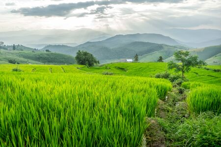 Rice field near mountain in Chiang Mai, Thailand and dramatic dark sky before the rain. Foto de archivo - 132123813
