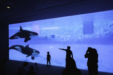 Nagoya, Japan – May 12, 2019: The silhouette of tourists watching an orca or killer whale whale at the aquarium. 免版税图像