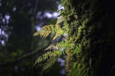 Fern and moss grow at a tree trunk. Nature background.