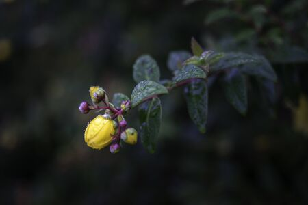 Dew drops on yellow flower in the morning. Banco de Imagens