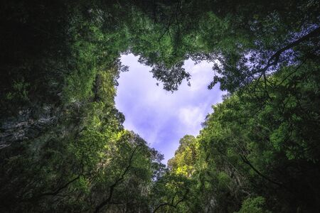 Heart shaped photography of sky in the rain forest. Nature background.