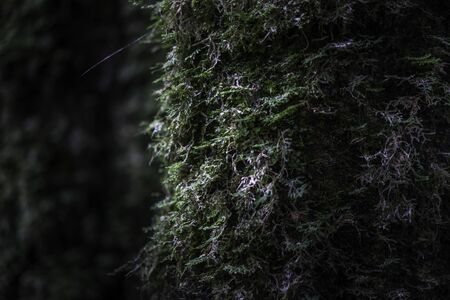 Clumps of moss growing on the old trunk in the rain forest. Nature background.