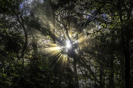 Sunlight rays passing through the trees in the rain forest.