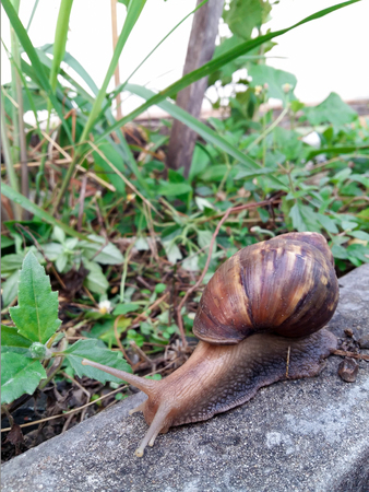 slithery: snail on sidewalk