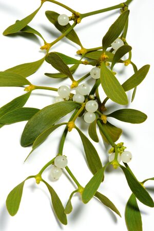 eacute: mistletoe branch