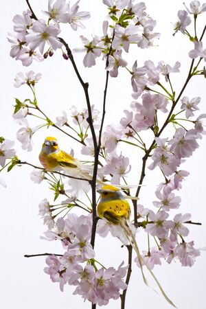Easter birds on a branch among the cherry blossom.