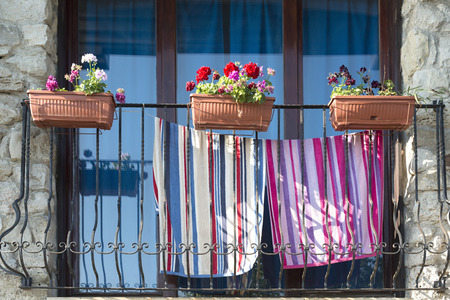 plant in pot: balcony with plant pot flowers