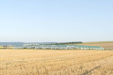 hothouse: hothouse in a wheat field