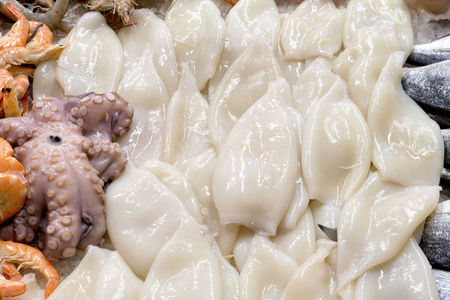 raw Squid on market display