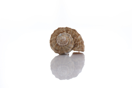 close up of a seashell on white background Stock Photo
