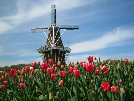 Aantrekkelijke wind molen en kleurrijke voorjaar tulips                              Stockfoto