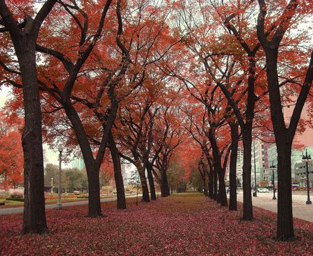 autumn colour: Attractive autumn colors in Grant Park, Chicago
