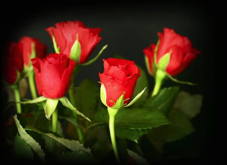 Red roses on black background Stock Photo - 2237401