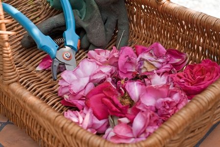 Wickerwork bag with rose petals and scissors from garden work Stock Photo - 3357386