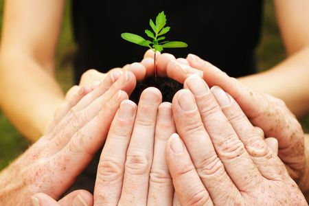 小さな苗の周りの六つの手