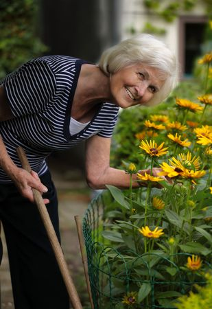 outil jardin: Senior woman holding stick of a garden tool and bending over yellow flowers,looking at camera Banque d'images