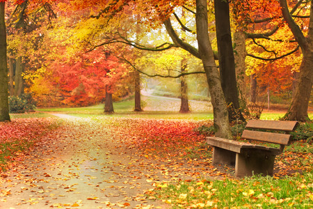 brilliant colors: Some autumnal trees showing brilliant colors in a park with an empty bench