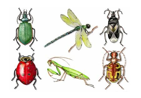 tiger beetle: insetti scarabeo coccinella mantide religiosa libellula tigre insetto coleottero minuti pirata