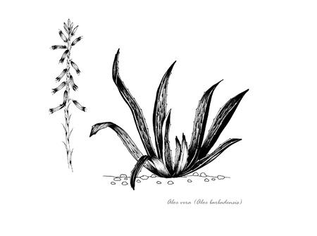 꽃의 세부 사항과 함께 알로에 베라 스톡 콘텐츠